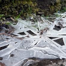 水たまりの氷