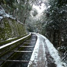 疏水べりの雪