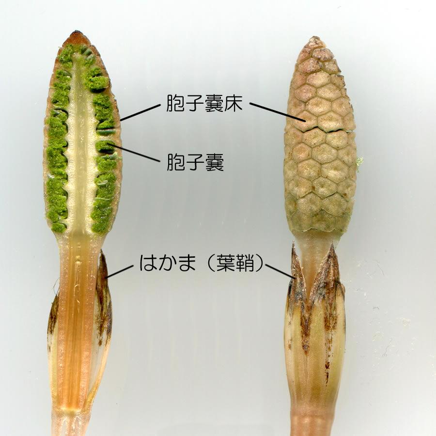 京都九条山自然観察日記 | ツク...