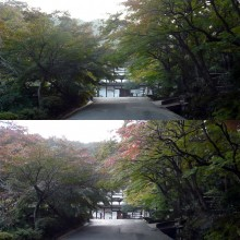 2013年の紅葉(3)