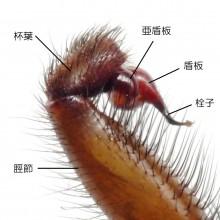 キシノウエトタテグモ