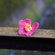 春の花いろいろ