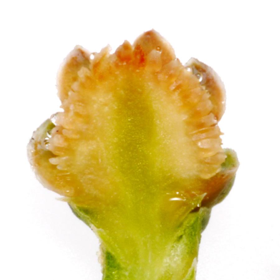 イトスギの画像 p1_30
