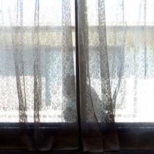 窓外のサル