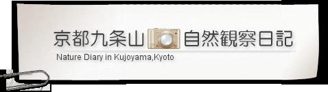 京都九条山自然観察日記