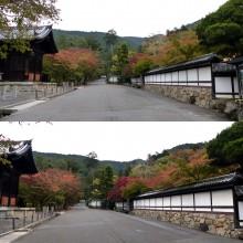 2014年の紅葉(2)