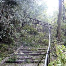台風21号の倒木