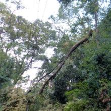 2018年台風21号の被害