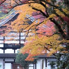 紅葉(南禅寺)