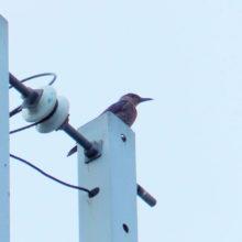 鳥(不明)