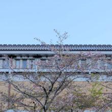 美術館のソメイヨシノ